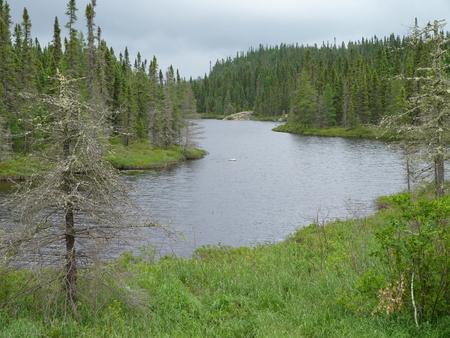 Creek and forest near Wawa Ontario Canada Banco de Imagens