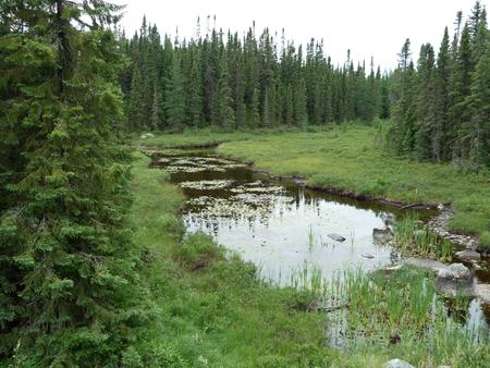 Creek and lush green forest near Wawa Ontario Canada