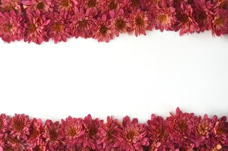 Fall floral background with deep red chrysanthemums on white.