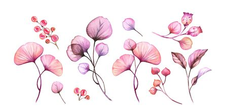 Watercolor Transparent flowers set isolated on white floral collection of berries, leaves, branches bundle in pastel pink violet purple botanical illustration wedding design elements Stock fotó