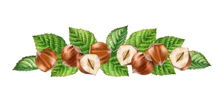 Realistic botanical watercolor arrangement hazelnuts leaves horizontal border. whole and half slice seeds isolated compositions hand painted, nuts brown beige green color for label design Stock Photo