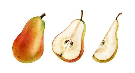whole half slice pink pear fruit realistic botanical watercolor illustration juicy isolated clipart hand drawn, fresh tropical food exotic orange yellow golden color for food label design