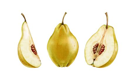 whole and half slice quince fruit realistic botanical watercolor illustration juicy isolated clipart hand drawn, fresh tropical food exotic orange yellow golden color for food label design