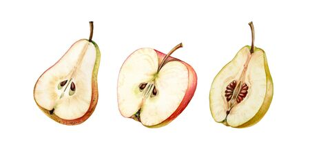 fruits half slice set pink apple pear golden quince seeds realistic botanical watercolor illustration juicy isolated on white hand drawn, tropical food exotic orange yellow color for food label design