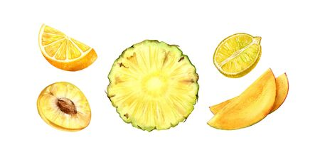 fruits half slice set yellow ananas orange lemon mango plum realistic botanical watercolor illustration juicy isolated on white hand drawn, tropical food exotic food for label design