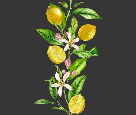 Lemon fruit branch with flowers seamless border realistic botanical watercolor composition: citrus leaves isolated artwork on dark grey hand drawn fresh tropical food yellow design element