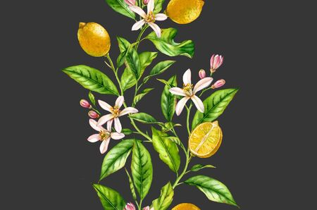 Lemon fruit branch with flowers seamless border realistic botanical watercolor composition: citrus tree leaves isolated artwork on dark grey hand drawn fresh tropical food yellow design element Stockfoto