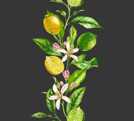 Lemon lime fruit branch with flowers seamless border realistic botanical watercolor composition: citrus tree leaves isolated artwork on dark grey hand drawn fresh tropical food yellow design element