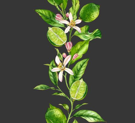 Lime fruit branch with flowers seamless border realistic botanical watercolor composition: citrus tree leaves isolated artwork on dark grey hand drawn fresh tropical food green design element