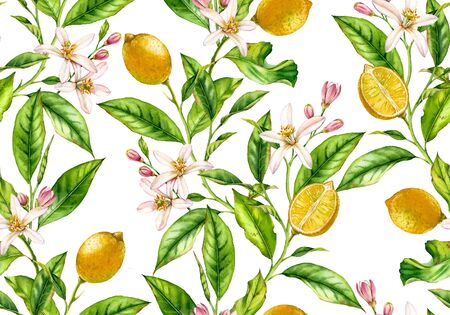 Lemon fruit seamless pattern tree branch with flowers realistic botanical floral surface design: whole half citrus leaves isolated artwork on white hand drawn for textile wallpaper