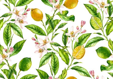 Lemon Lime fruit seamless pattern watercolor tree branch with flowers realistic botanical floral surface design: whole half citrus leaves isolated artwork on white hand drawn for textile wallpaper Stockfoto