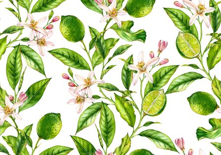 Lime branch seamless pattern watercolor fruit tree with flowers realistic botanical floral surface design: whole half citrus leaves isolated artwork on white hand drawn for textile wallpaper Stockfoto