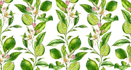 Lime fruit seamless pattern watercolor tree branch with flowers realistic botanical floral surface design: whole half citrus leaves isolated artwork on white hand drawn for textile wallpaper