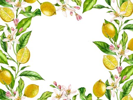Horizontal frame Lemon fruit branch with flowers realistic botanical watercolor banner: citrus tree leaves isolated artwork on white hand drawn fresh tropical food design arrangement for text label
