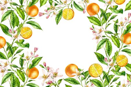 Orange fruit branch Horizontal frame with flowers leaves. Realistic botanical watercolor banner: citrus tree isolated artwork on white hand drawn fresh tropical food design arrangement for text label