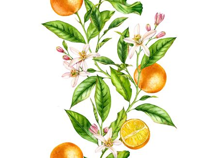 Orange fruit seamless border tree branch with flowers realistic botanical floral surface design: whole half citrus leaves isolated on white hand drawn for textile wallpaper