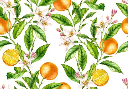 Orange fruit seamless pattern tree branch with flowers realistic botanical floral surface design: whole half citrus leaves isolated on white hand drawn for textile wallpaper Stockfoto