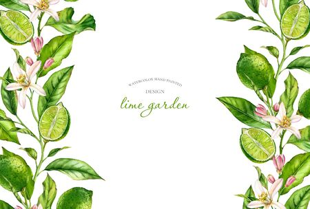 Horizontal frame Lime fruit branch with flowers realistic botanical watercolor banner: citrus tree leaves on the sides isolated on white hand drawn fresh tropical food design arrangement for text card Stockfoto