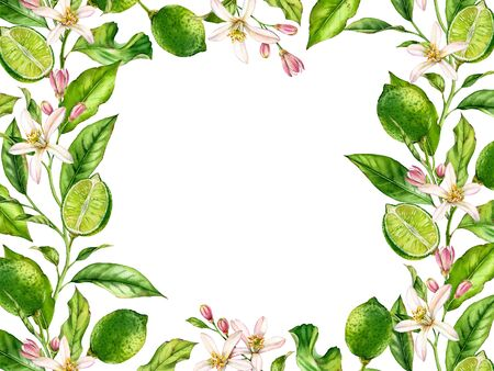 Horizontal frame Lime fruit branch with flowers realistic botanical watercolor banner: citrus tree leaves isolated artwork on white hand drawn fresh tropical food design arrangement for text card