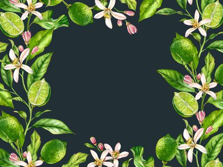 Horizontal frame Lime fruit branch with flowers realistic botanical watercolor banner: citrus tree leaves hand drawn artwork on dark background fresh exotic food design arrangement for sale text card Stockfoto