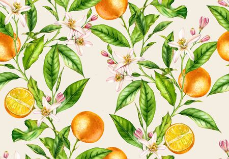 Orange fruit branches. Seamless pattern with flowers realistic botanical floral illustration on light beige background hand painted Stockfoto