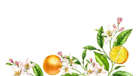 Orange fruit branch bottom corner composition. Realistic botanical watercolor illustration with citrus tree and flowers, hand drawn isolated floral design on white.