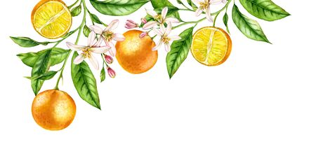 Orange fruit branch corner composition. Realistic botanical watercolor illustration with citrus tree and flowers, hand drawn isolated floral design on white.