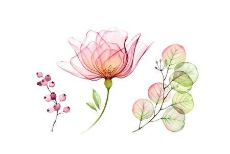 Watercolor Transparent Rose floral set. Eucalyptus branch, flowers and berries isolated on white. Botanical illustration for wedding design