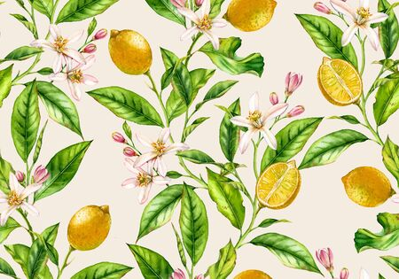 Lemon branch seamless watercolor pattern. Fruit tree with flowers realistic botanical illustration on light beige background hand drawn for textile wallpaper