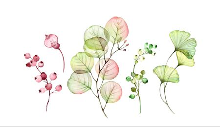 Watercolor Transparent floral set. Eucalyptus branch, leaves and berries isolated on white. Botanical illustration for wedding design