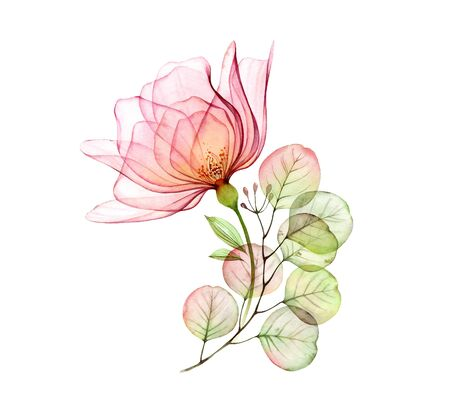 Transparent rose floral arrangement of big pink flower and eucalyptus branch. Watercolor hand drawn illustration isolated on white for wedding stationery, card print