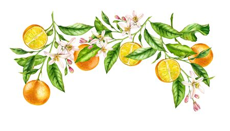 Orange fruit branch frame composition. Realistic botanical watercolor illustration with citrus flowers, hand drawn isolated floral design on white.