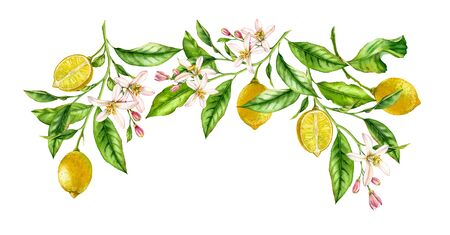 Lemon fruit branch frame composition. Realistic botanical watercolor illustration with citrus tree and flowers, hand drawn isolated floral design on white Stockfoto