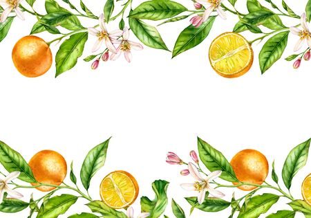 Orange fruit branch Horizontal frame with flowers. Realistic botanical watercolor illustration: citrus tree isolated on white hand drawn arrangement for text label