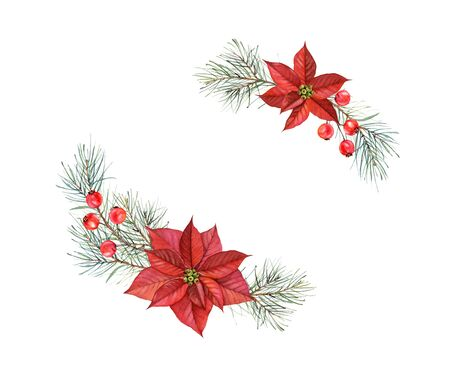 Watercolor bouquets of Christmas Stars. Hand painted illustration with two poinsettia flowers, pine tree, red berries. Winter holiday frame isolated on white for greeting card and festive decor Stock Photo