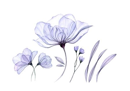 Watercolor floral set isolated on white. Transparent rose collection of big flowers, leaves, branches in pastel blue. Botanical illustration for wedding design, greeting cards