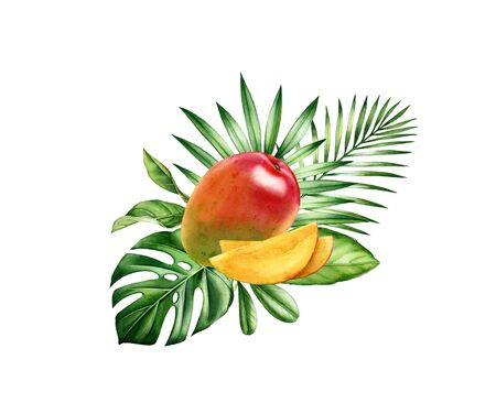 Watercolor mango fruits. Tropical sliced fruit with palm branches. Realistic monstera leaf. Botanical hand drawn illustration for food label design