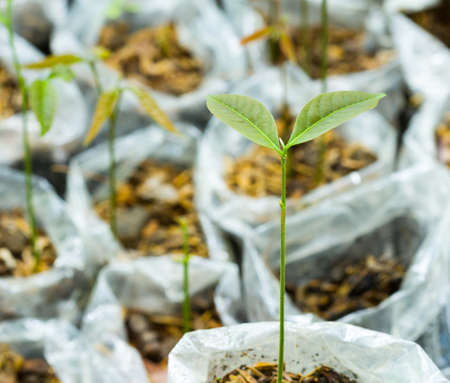 many young fresh seedling stands in plastic pots photo
