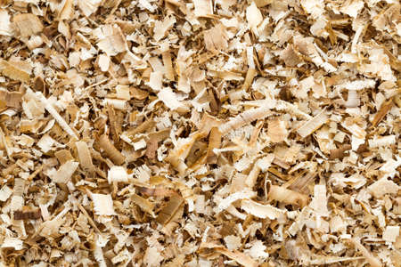 Background of the golden curls from teak Wood shavings  photo