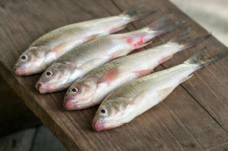 siamensis: Siamese mud carp fish -  Henicorhynchus siamensis  on wooden plate