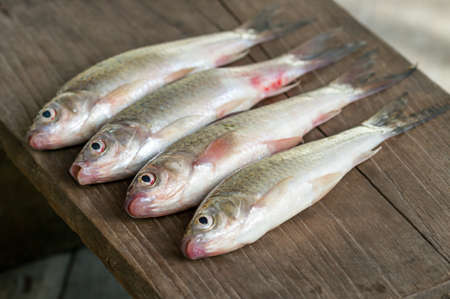 Siamese mud carp fish -  Henicorhynchus siamensis  on wooden plate Stock Photo - 23482325