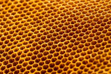yellow beautiful honeycomb without honey texture photo