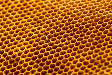 yellow beautiful honeycomb without honey texture photo