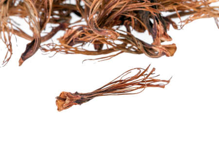 androecium: BOMBAX CEIBA LINN - closed up dried androecium for food Stock Photo