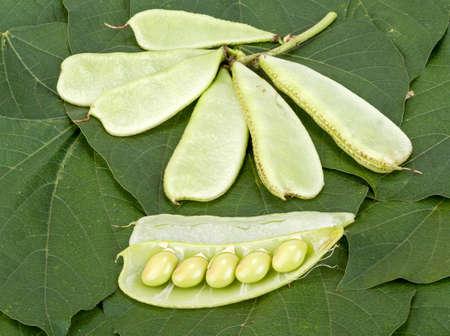 dolichos lablab: Hyacinth Bean - Dolichos lablab L. on green leaves