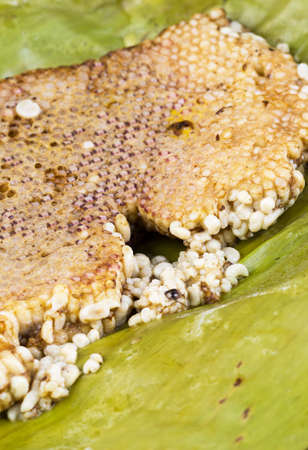 expensive food: roasted immature beehive on banana leaves - Thai expensive traditional food