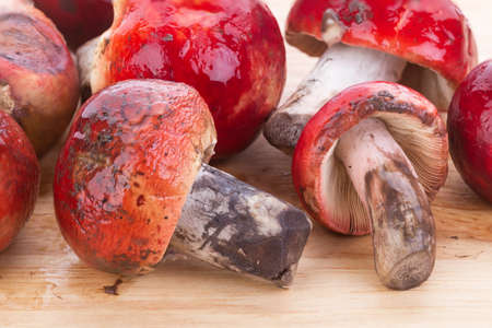 fungi: fresh red Rosy Russula (Russula rosacea Pers. Ex S.F. Gray) fungi from nature on wooden plate