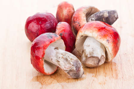 ex: fresh red Rosy Russula (Russula rosacea Pers. Ex S.F. Gray) fungi from nature on wooden plate