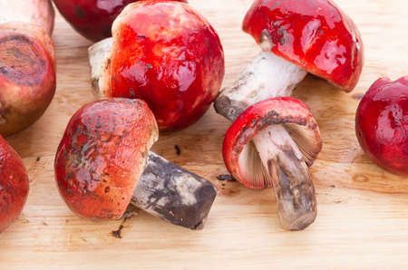 pers: fresh red Rosy Russula Russula rosacea Pers. Ex S.F. Gray fungi from nature on wooden plate