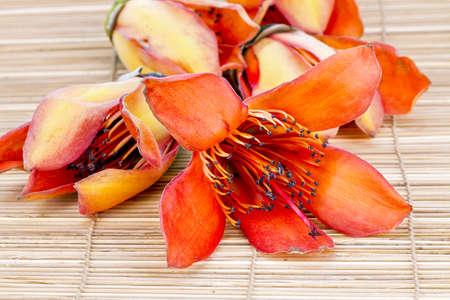 androecium: Flower of Fresh BOMBAX CEIBA LINN - prepare for drying androecium for food